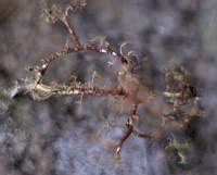 lichen & moss at machu pichu